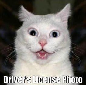 poza permis de conducere